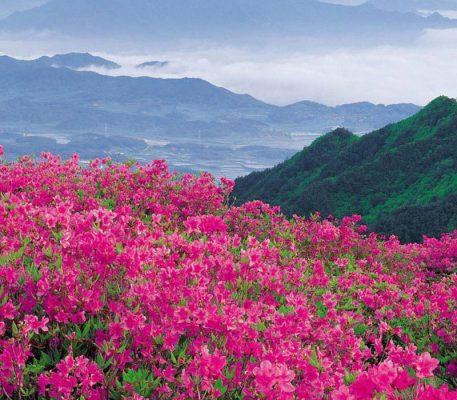 Bhutan Rhododendron festival- 8 Days