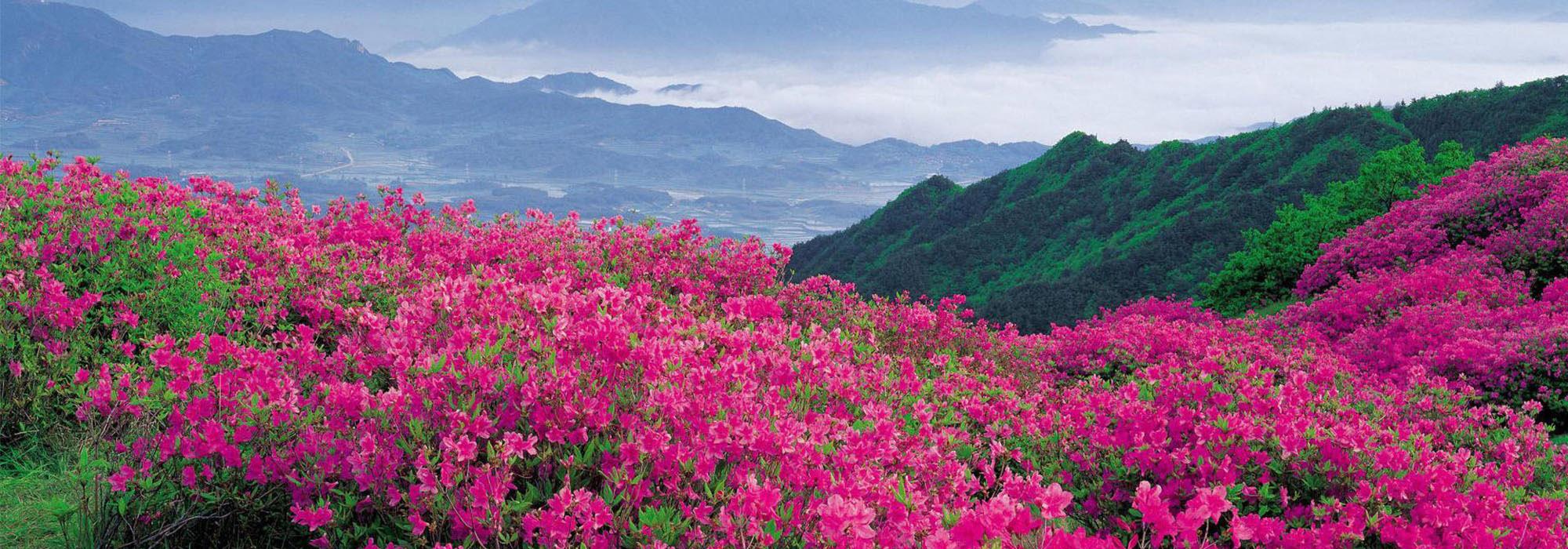 Bhutan Rhododendron festival