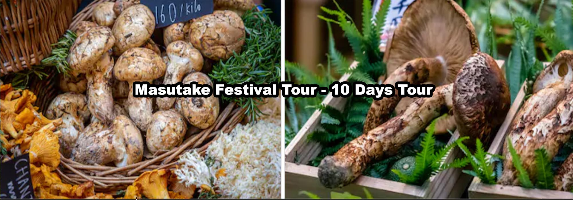 Masutake Festival tour